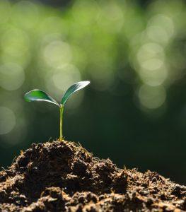 030316_plantgrows2