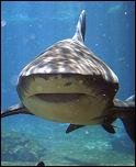 gw_shark