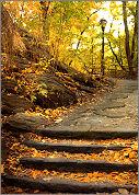 fall_morning